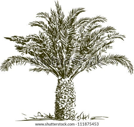Date palm tree Stock Photos, Images, amp; Pictures  Shutterstock