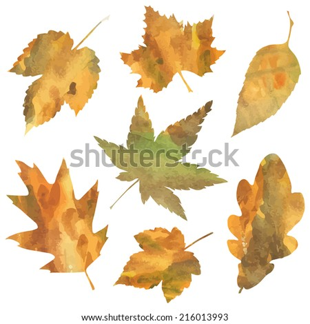 decorative autumn leaves isolated on white background. vector illustration  - stock vector