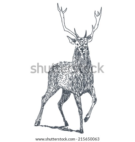 Deer sketch drawing isolated on white background - stock vector