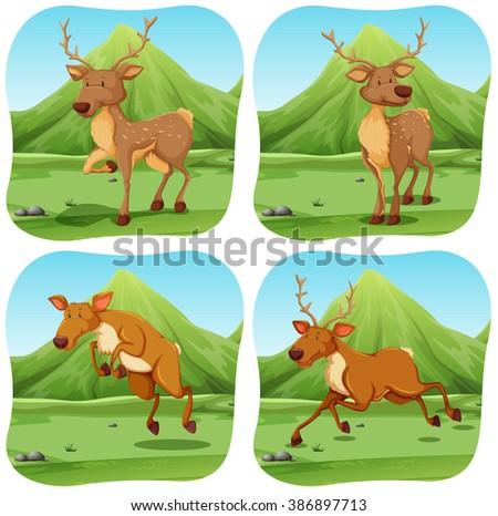 Deers in four different scenes illustration - stock vector