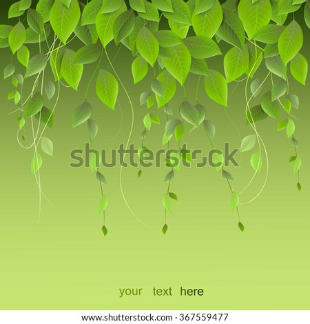 dense foliage hanging on a green background, climbing plants, vector - stock vector
