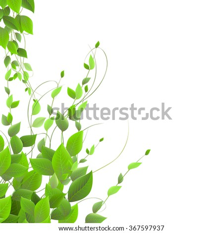 dense foliage on a white background, climbing plants, vector.  shrub  and juicy green leaves on a white background - stock vector