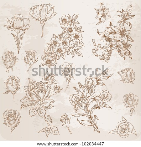 Detailed Hand Drawn Flowers - for scrapbook and design in vector - stock vector