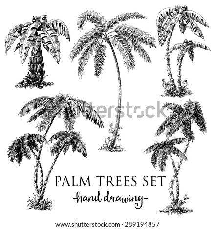 Detailed palm trees set - stock vector