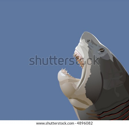Detailed vector illustration of a shark head with open mouth with teeth. - stock vector