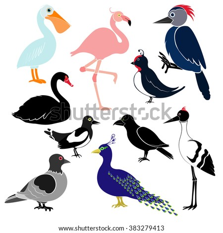 Different birds isolated on white background. Pelican, flamingo, woodpecker, swan, magpie, swallow, crows, cranes, peacock, pigeon.  - stock vector