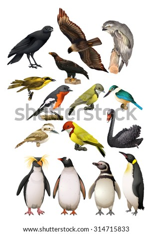 Different kind of birds illustration - stock vector