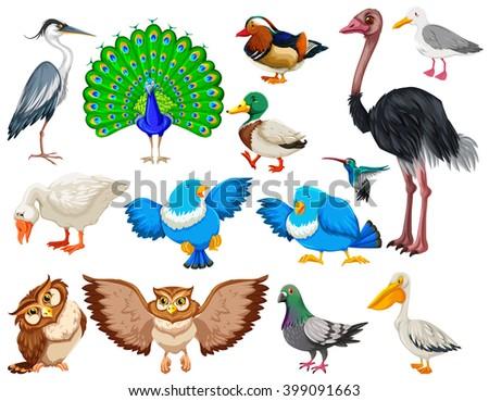 Different kind of wild birds illustration - stock vector