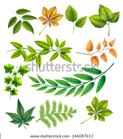Different leaves on a white background - stock vector