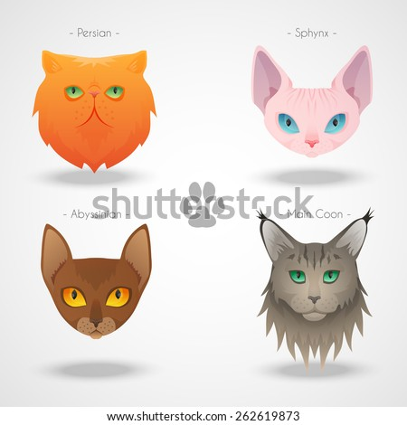 Different luxury cat breeds faces set. See more illustrations in my portfolio. - stock vector