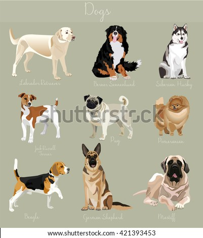 Different type of dogs set. Big and small animals. Dogs set, Dogs collection, Dogs illustration, Dogs vector image, Dogs characters, Dog friend, Dog friendly, Dogs cartoon, Dog animal, Dog home pet - stock vector
