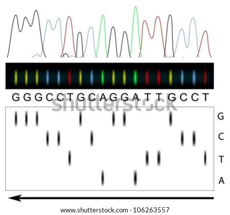 DNA sequencing principle - stock vector
