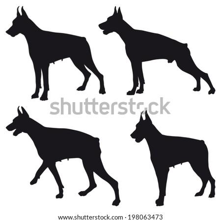 Doberman four different black silhouettes - stock vector