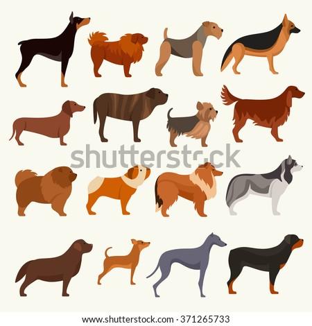 Dog breeds vector illustration - stock vector