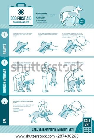 Dog cpr and first aid, pet emergency procedure for chocking and reanimation with stick figures - stock vector
