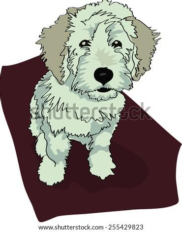 Dog illustration - Terceira Cattle Dog puppy, light color - stock vector