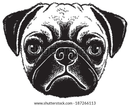 Dog portrait: Black and white vector sketch of a fawn pug's face - stock vector