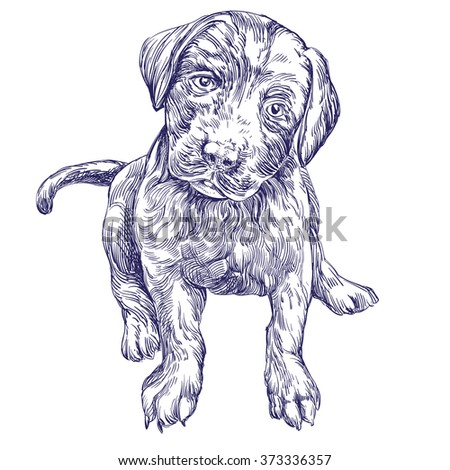dog puppy hand drawn vector llustration realistic sketch - stock vector