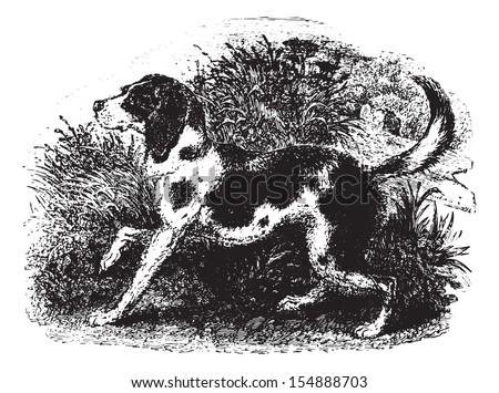 Dog, vintage engraved illustration. Animaux Sauvages et Domestiques - For kids - 1892. - stock vector