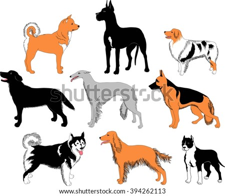 Dogs breeds - recognizable silhouettes of big dogs of most popular breeds. - stock vector