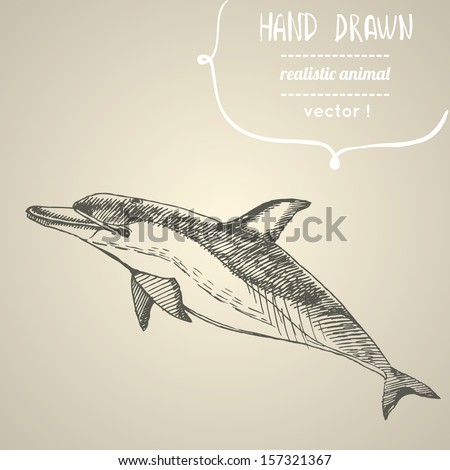 Dolphin. Hand drawn vector illustration. Can be used separately from your design. - stock vector