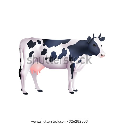 Domestic black and white spotted cow isolated on white background realistic vector illustration - stock vector
