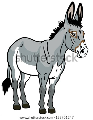 donkey,front view picture isolated on white background,vector illustration - stock vector