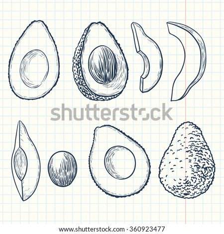 Doodle avocado set - stock vector