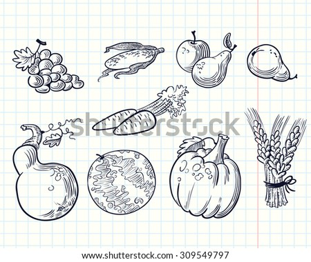 Doodle harvesting set with fruits and vegetables - stock vector
