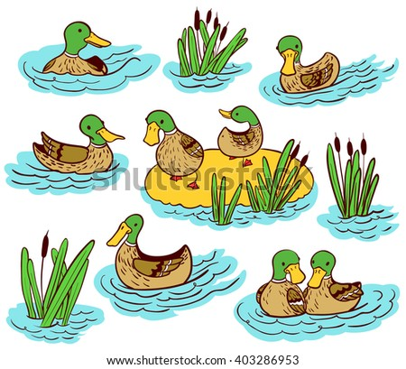 Doodle vector line art illustration set with ducks and reed on water - stock vector