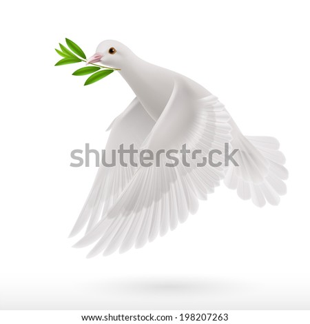 Dove of peace flying with a green twig after flood on white background - stock vector