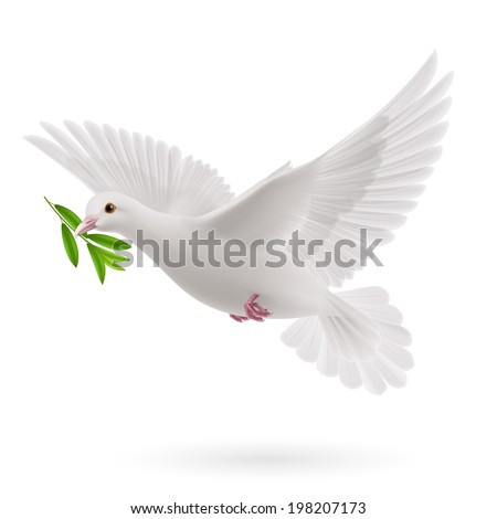 Dove of peace flying with a green twig olive after flood on white background - stock vector