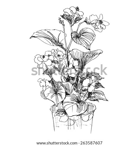 Image Result For House Plant With Pink Flowers