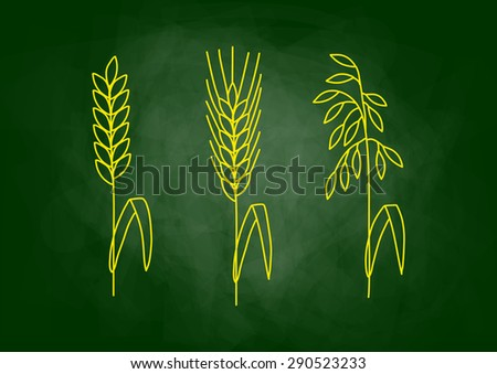 Drawing of cereals on blackboard - stock vector