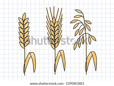 Drawing of cereals on squared paper - stock vector