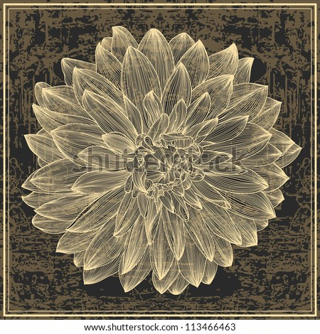 drawing of dahlia flower on grunge background. Element for your design, engraving style - stock vector