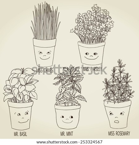 Drawing of different herbs - stock vector