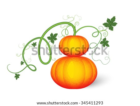 Drawing of fresh pumpkin isolated on white background.Vector vegetable illustration. - stock vector