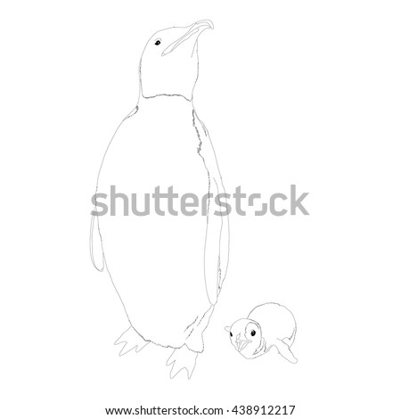 Drawing vector isolated Emperor penguin - aptenodytes forsteri - with a baby outlines - stock vector
