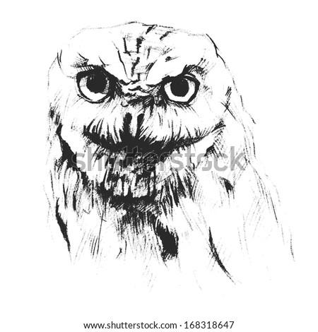 drawn owl - stock vector