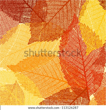 Dry autumn leaves template. EPS 8 vector file included - stock vector