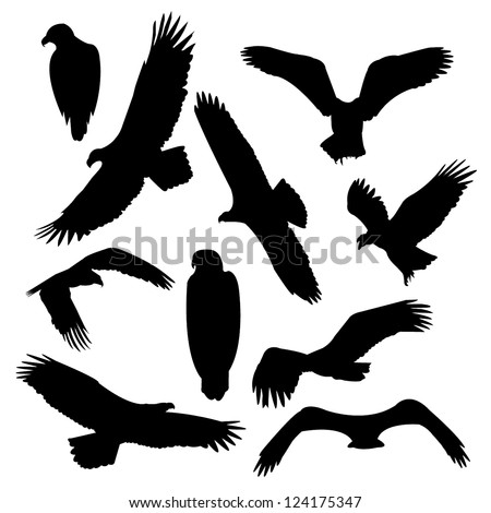 Eagles vector - stock vector