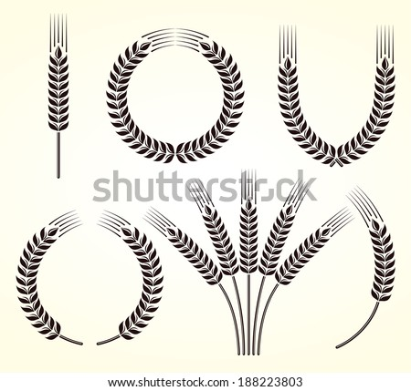 Ears of wheat and rye set. Vector  - stock vector