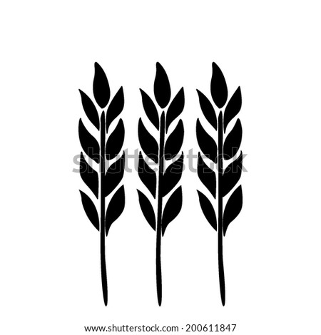 Ears of wheat, barley isolated on white for your design. Vector illustration. - stock vector