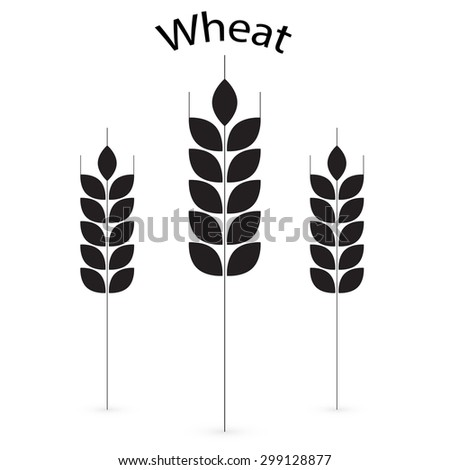 Ears of Wheat, Barley or Rye vector visual graphic icons, ideal for bread packaging, beer labels etc. 2 - stock vector