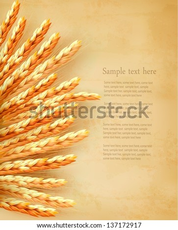 Ears of wheat on old paper background. Vector illustration - stock vector