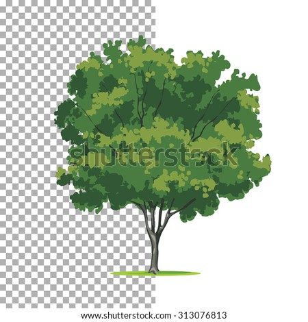 Eastern-redbud tree. Isolated vector tree on white background. - stock vector