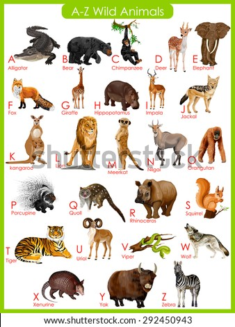 easy to edit vector illustration of chart of A to Z wild animals - stock vector