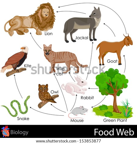 Tiger Food Chain For K...