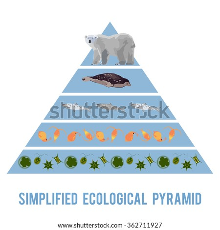 Ecosystem energy flow. Simplified ecological pyramid - stock vector